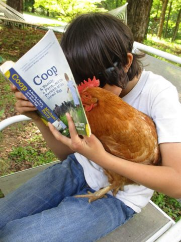 Chicken into Coop